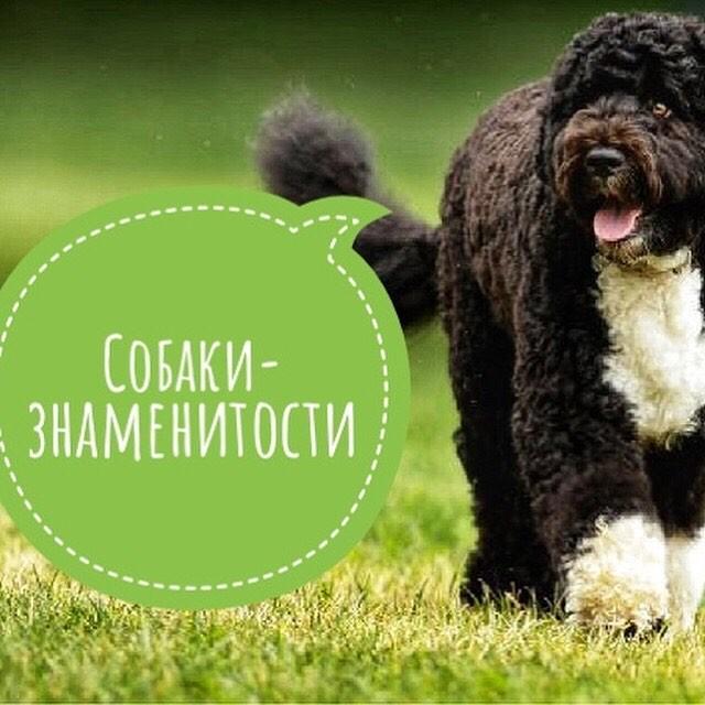 Собаки знаменитости