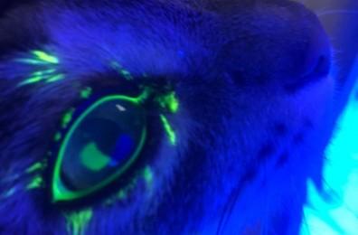 Тест Зейделя. Ярко светящиеся пятно по центру глаза - место нарушения целостности структуры роговицы.